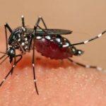 बारिश में डेंगू से बचाव पर विशेषज्ञ की राय