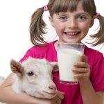 इम्यून बूस्टर है बकरी का दूध
